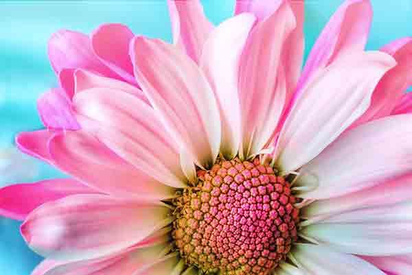 Unscharfes Foto einer Blume zeigt hohe Bildoptimierung