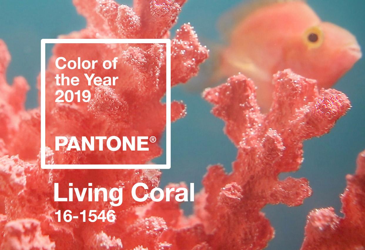 Bild: Ein Korallenriff mit Fisch in der Farbe Living Coral