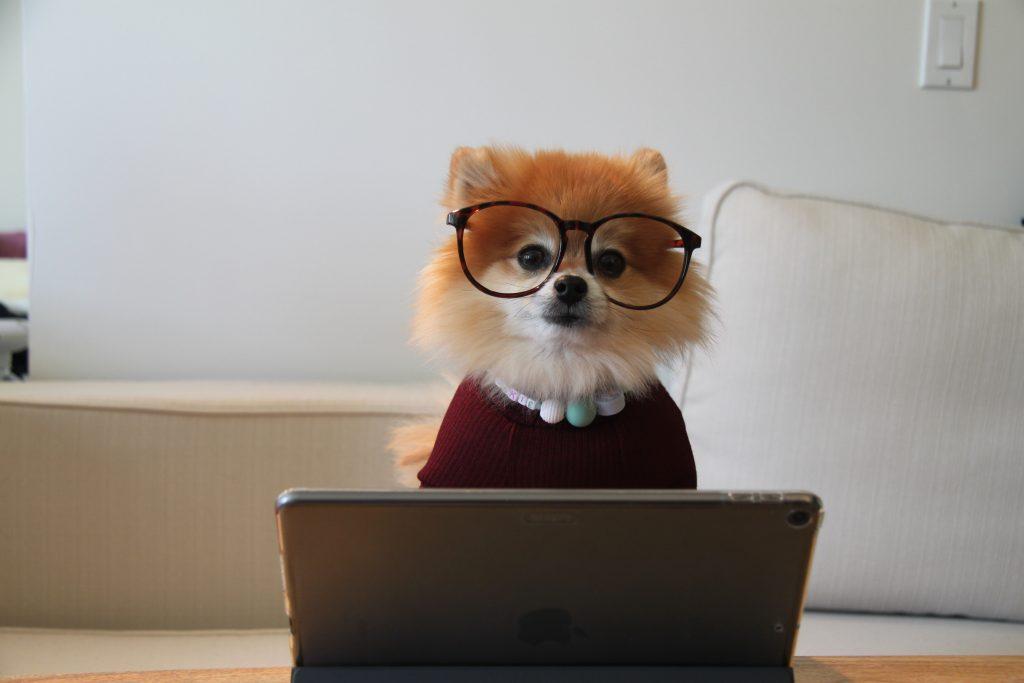 Fuchs vor dem PC ein Sinnbild für bewegte online Workshops